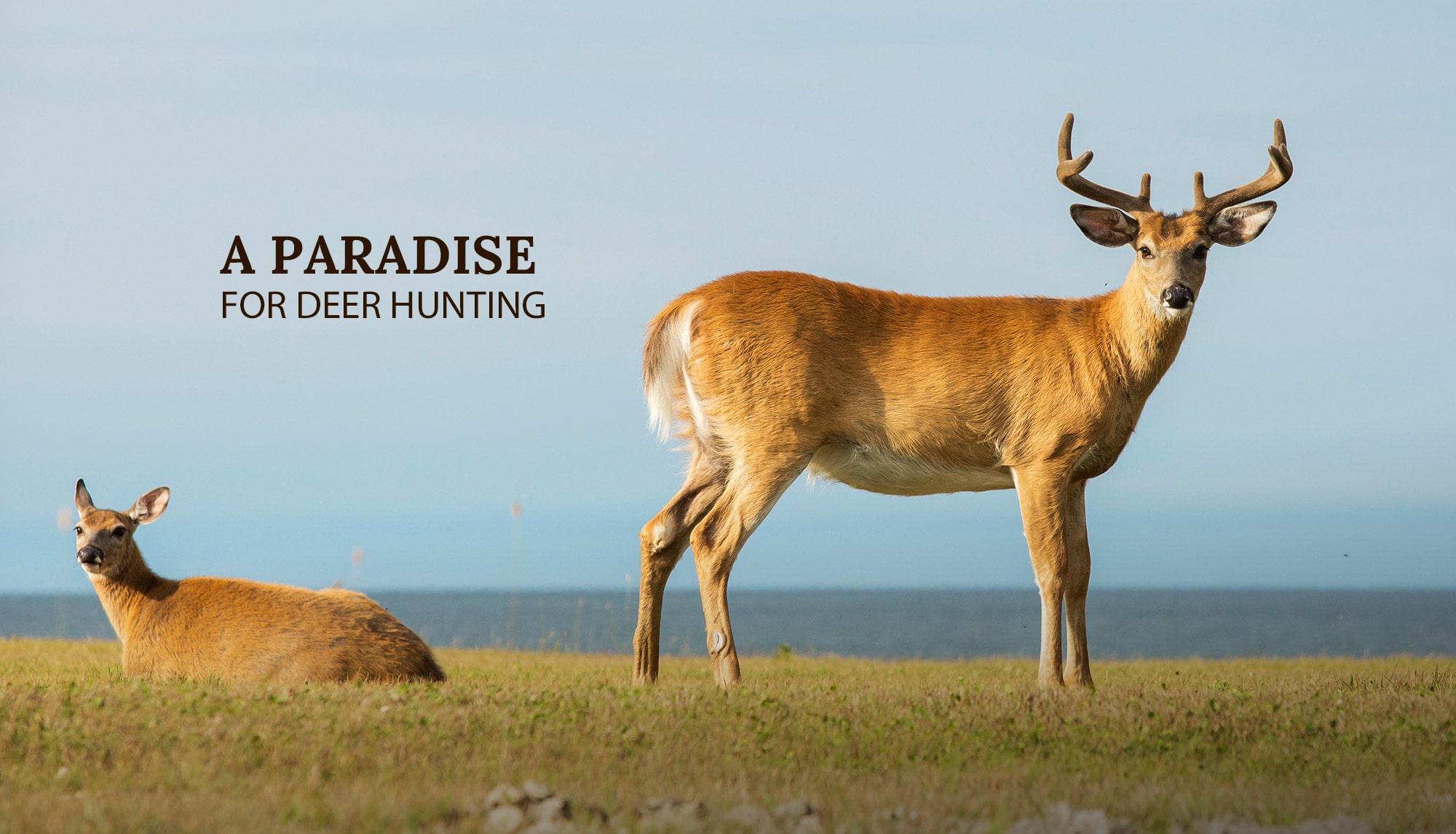 paradis pour chasse aux cerfs